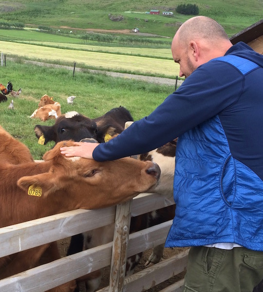Man meets cow at Erpsstadir dairy farm