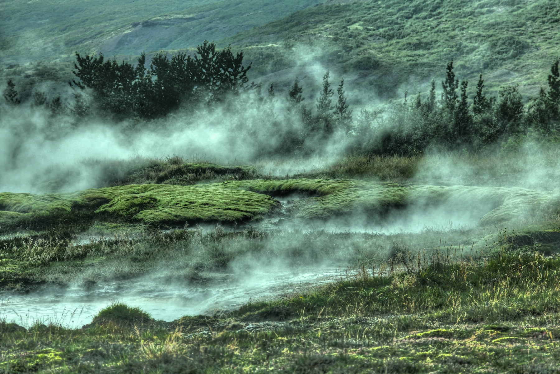Moss and steam